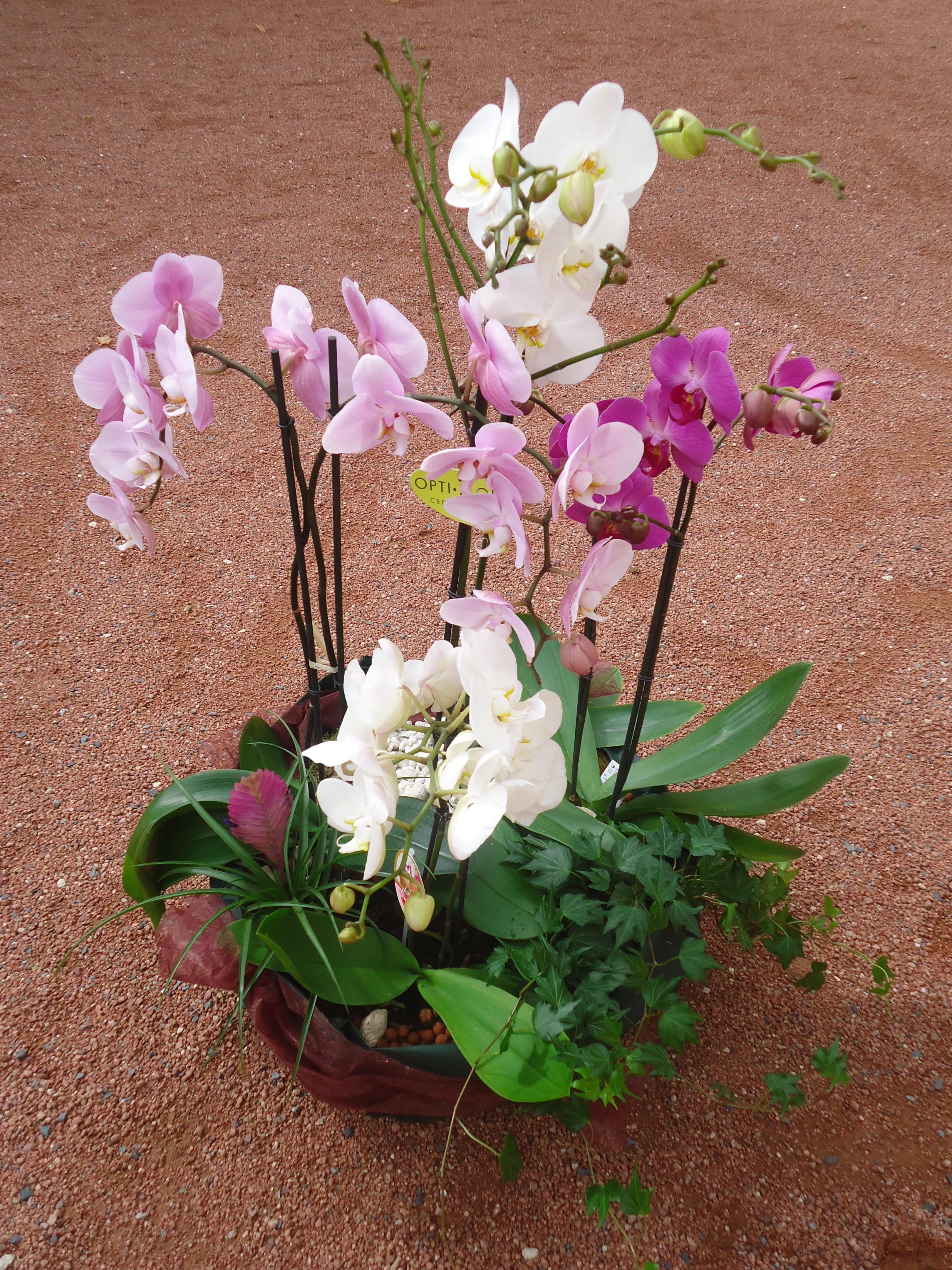 Composition d orchid es plantes d 39 ochid es assemblage d for Fermer la fenetre