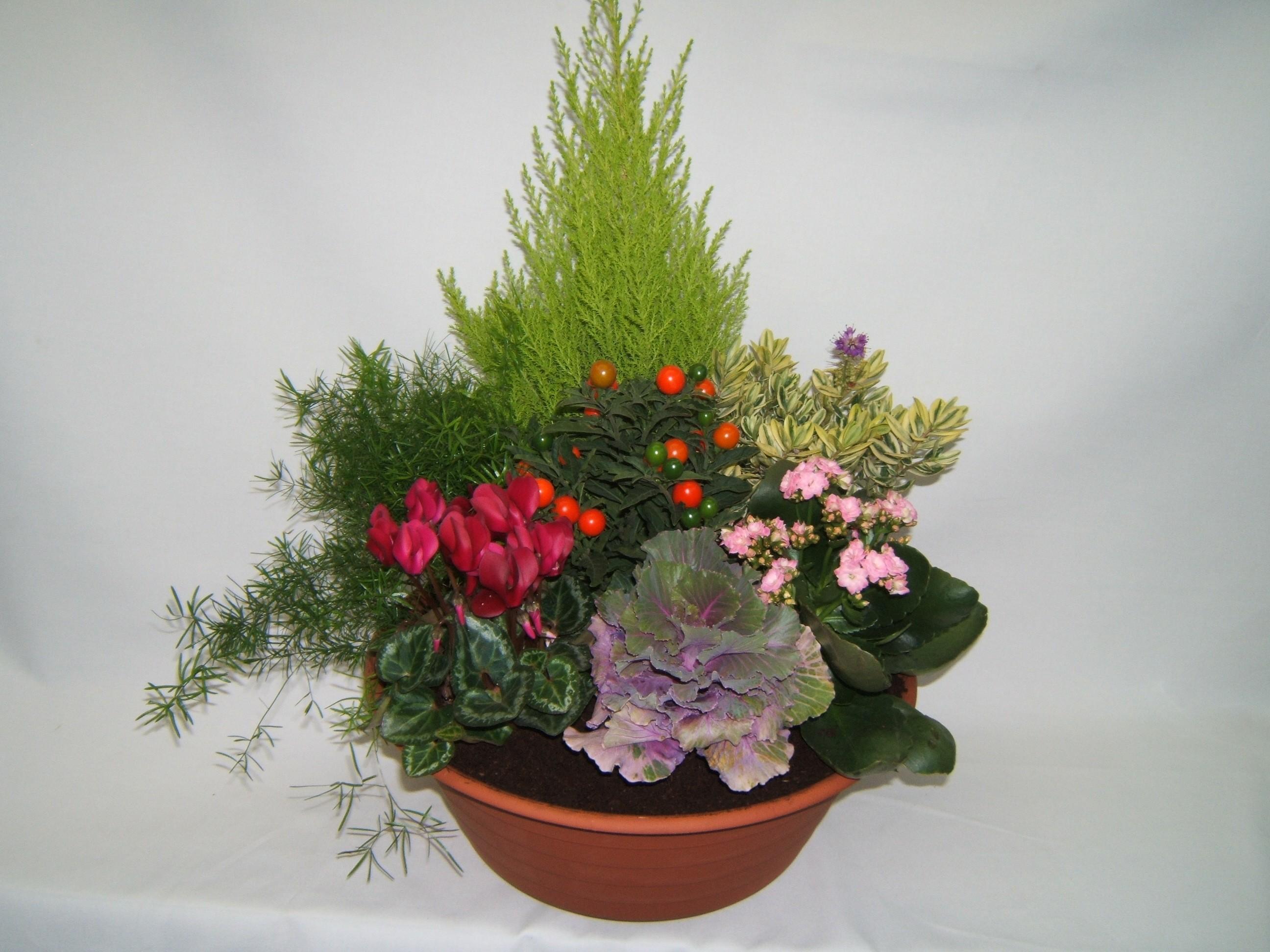 composition de plantes dexterieur dlicieux plantes grasses d exterieur plantes grasses. Black Bedroom Furniture Sets. Home Design Ideas