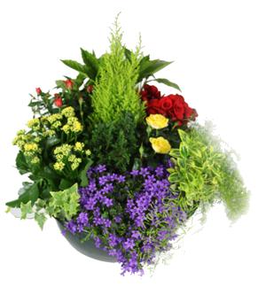 Livraison de fleurs montreuil sous bois 93100 florafrance for Envoie de fleurs pas cher