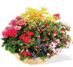 Livraison de fleurs à BELLEVILLE SUR SAONE et sa région (69)