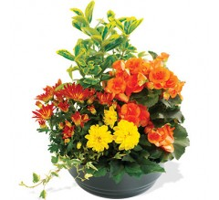 Envoi de fleurs à RUEIL MALMAISON  et sa région  (92)