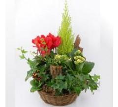 coupe de plantes vertes et fleuries
