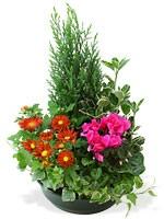 livraison de fleurs marseille envoi de fleurs toulon fleurs obs ques marseille fleurs. Black Bedroom Furniture Sets. Home Design Ideas