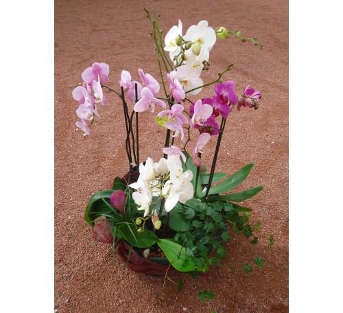 COUPE DE PLANTES  D'ORCHIDEES ref CDP 09