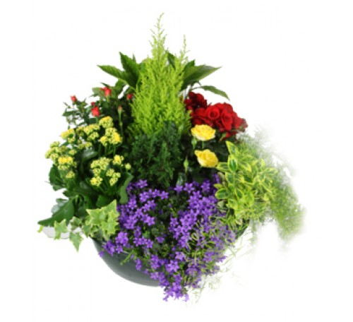 fleurs Saint Genis Laval