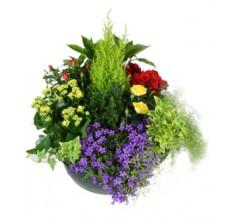 coupe de plantes sepulture