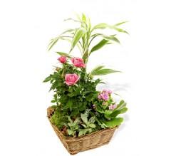 Panier de plantes Lyon